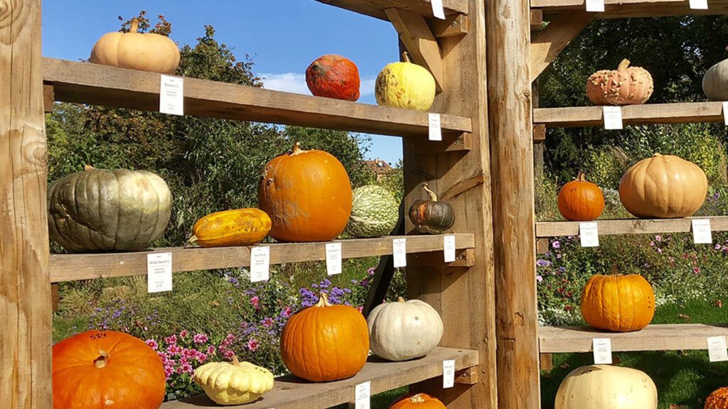 pumpkin-origin-display-ludwigsburg-pumpkin-festival-Template
